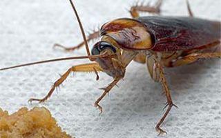 Откуда берутся тараканы и профилактика против них