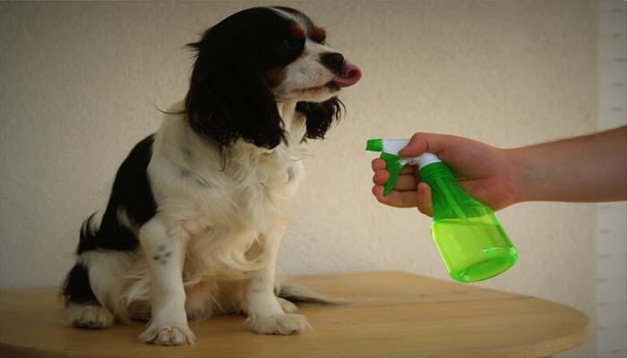Обработка собаки спреем от блох