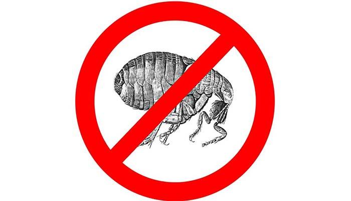 Ликвидация паразитов