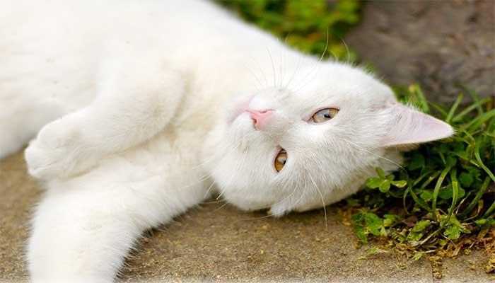 Блохи могут передаваться от бездомных кошек