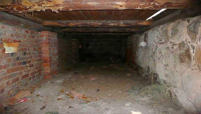 Блохи часто живут в подвальных помещениях