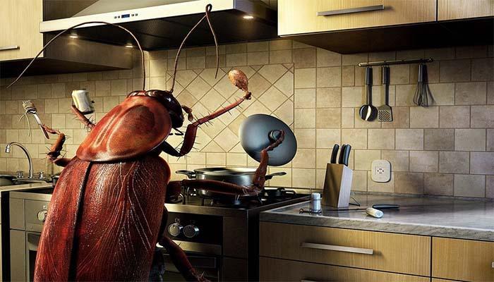 Таракан в квартире человека