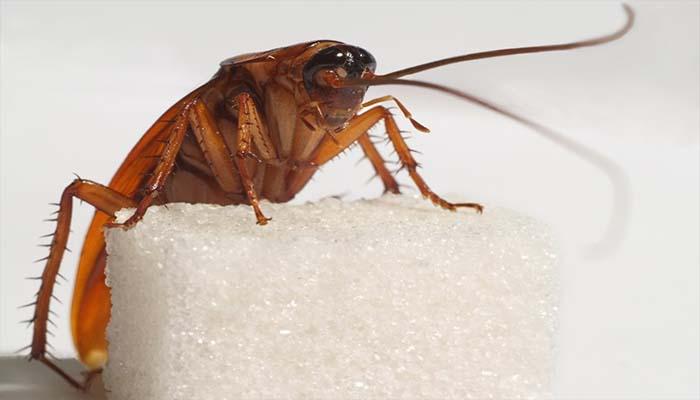 Тараканы могут составить неприятное соседство не только в реальной жизни, но и во сне