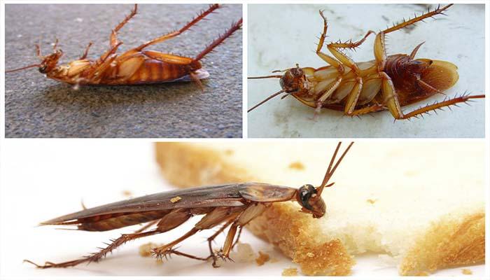 как пользоваться приманкой для тараканов