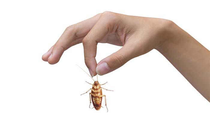 Таракан в руке