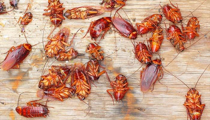 Как избавиться от тараканов в квартире навсегда: что помогает