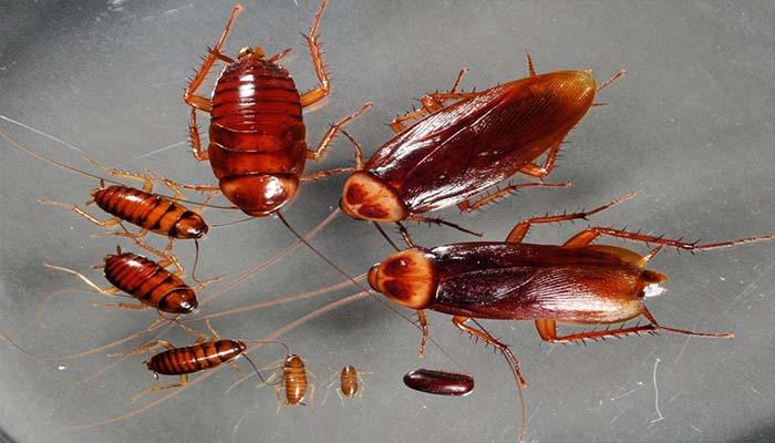 Много мелких тараканов во сне