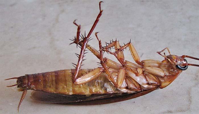 Убитые тараканы предвещают крайне неожиданное событие в жизни