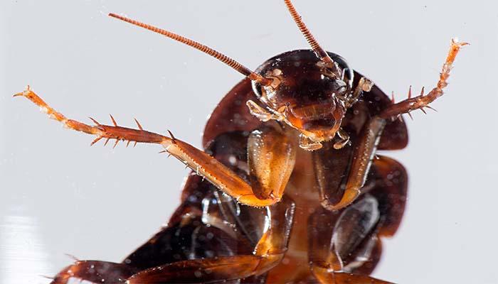 Если снится большой таракан, можно смело считать, что все ваши проблемы на грани разрешения