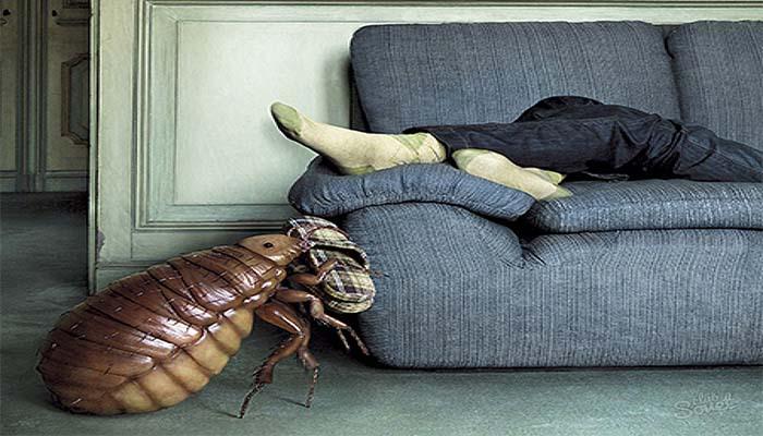 Приход тараканов из соседних квартир явление довольно частое