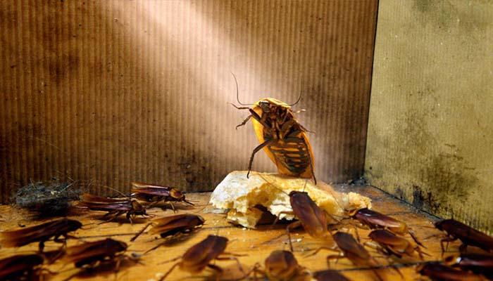 Остатки еды и общая антисанитария в доме - самые распространенные причины появления насекомых