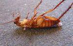 Как убить тараканов: методы и средства борьбы