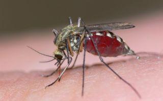Чем опасны укусы комаров и мошек и как лечить аллергию