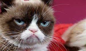 Чем вывести блох у кошки самостоятельно
