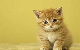 Выбираем ошейники от блох для кошек