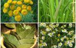 Эффективные травы для борьбы с клопами