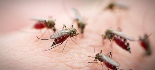 Как выбрать средство которое помогает от укусов комаров