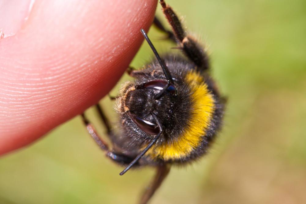 Нападение насекомого