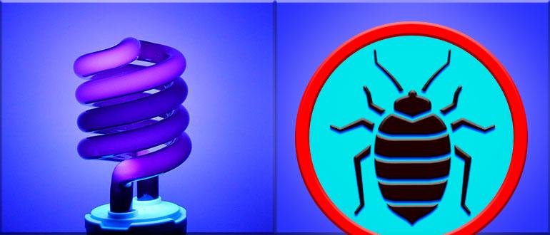ультрафиолет от клопов